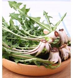 现挖新鲜蒲公英带根整株山野菜野生苦菜婆婆丁 1斤