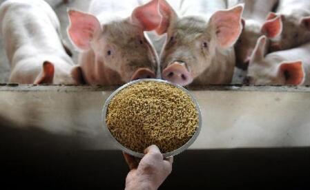 多地出台政策鼓励养猪,明年养猪的多吗?看完心中有数了