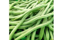 大棚新鲜采摘的四季豆大量提供