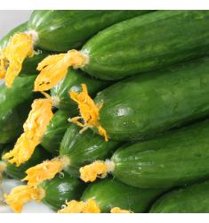5斤超值荷兰小黄瓜新鲜小黄瓜新鲜水果蔬菜黄瓜孕妇水果生吃水果蔬菜青瓜精选5斤可选 5斤实惠装