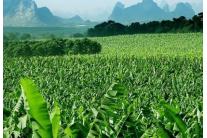 广西金穗农业集团